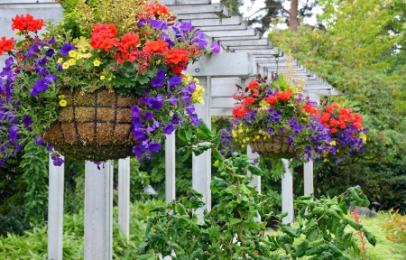 Hanging flower baskets on summer patio