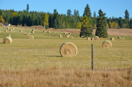 Bales of hay on the farm in autumn Stock Photo - 15685657