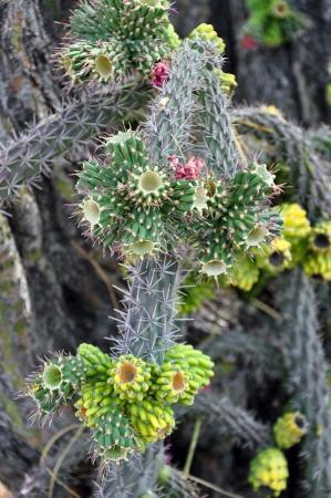 Prickly flowering cactus plant Stock Photo - 17009169