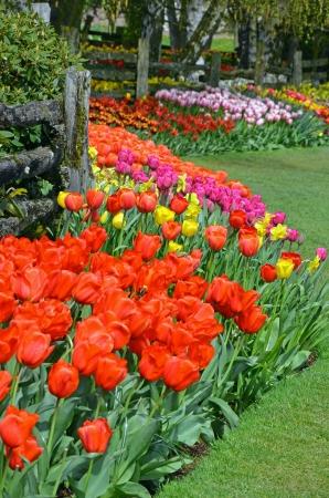 Colorful spring garden tulip garden in bloom Stock Photo