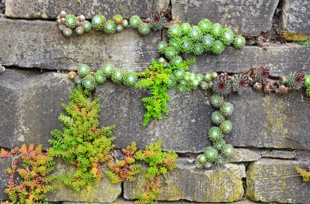 Plants growing out of old brick garden wall