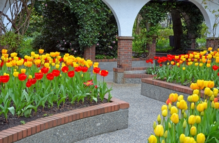 Colorful tulips blooming in courtyard