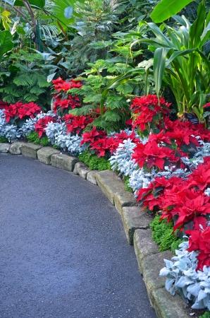 conservatory: Beautiful botanical garden during the christmas season