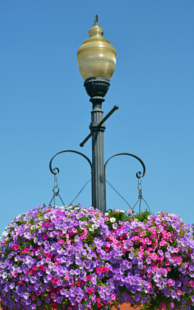 street lamp: Street light with colorful hanging petunia flower baskets
