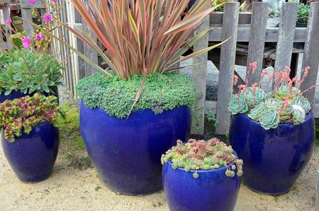 jardineras: Plantadores de cer�mica azules llenos de plantas de cactus