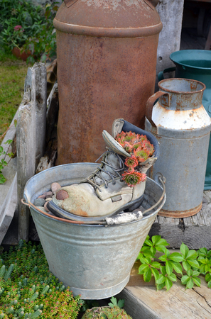 weathered: Old weathered workboot filled with plants