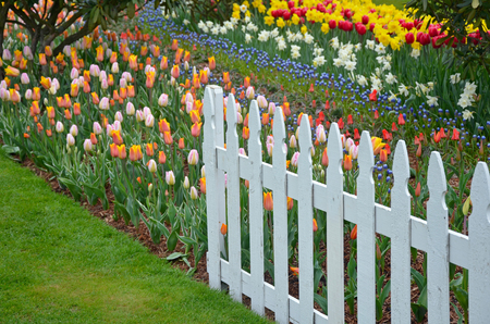 picket fence: Colorful spring garden and white picket fence