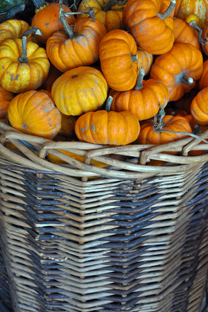 Wicker basket filled with mini pumpkins Stock Photo