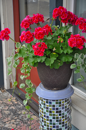Beautiful red geraniums planter on decorative mosaic tile stand