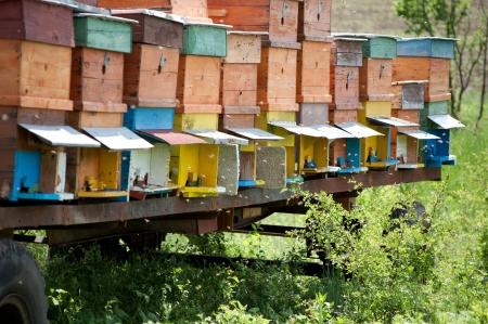 Several handmade bee hives