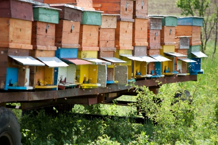 Several handmade bee hives