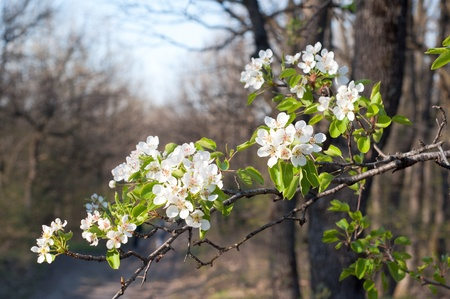 Spring tree flower