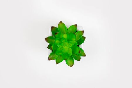 Top view of a flower pot on a white background. Isolated background. 版權商用圖片