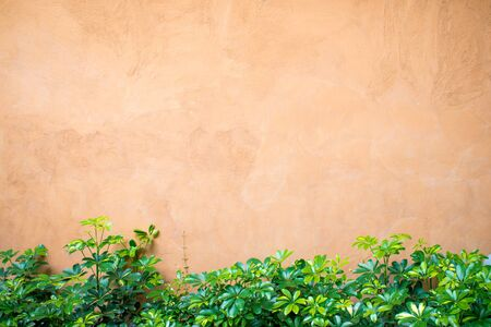 Texture of orange plaster with green shrubs with copy space. 版權商用圖片