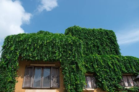 Hedges on the roof of the house with beautiful sky.