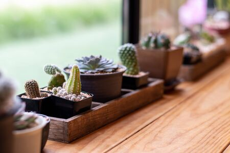 Close-up of a cactus in a small pot for a vintage home decor.