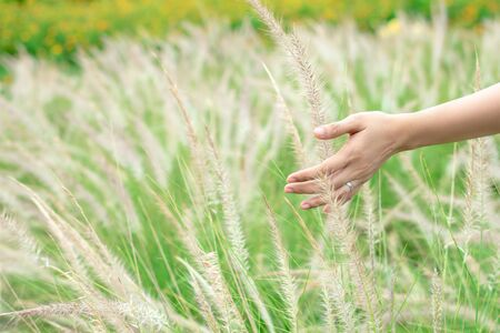 Close up of the hands of woman touching the grass in the meadow.