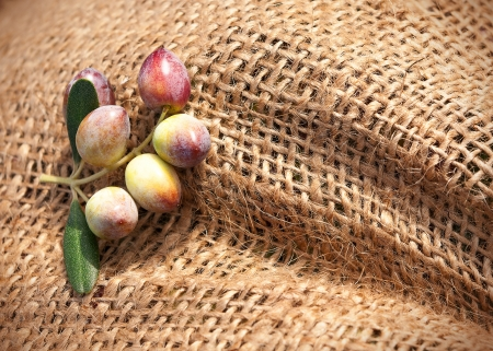 Horizontal closeup of a sack with a cluster of olives on it