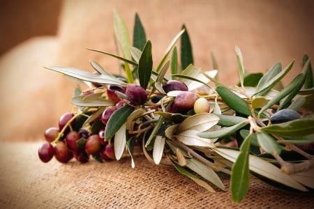 A circlet of olive branches on a sack
