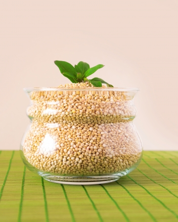 Glass pot filled with quinoa seeds with basil leaf on top