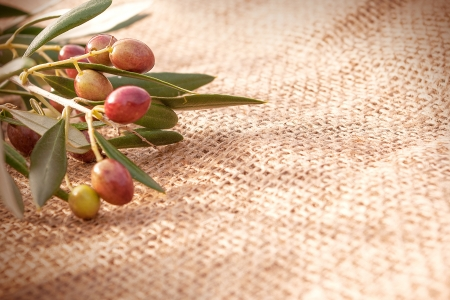A branch with olives on a sack