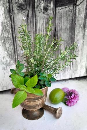 Fresh aromatic herbs used in Mediterranean cuisine