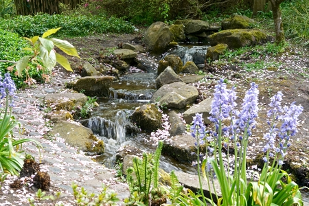watercourse: watercourse between flowers and plants