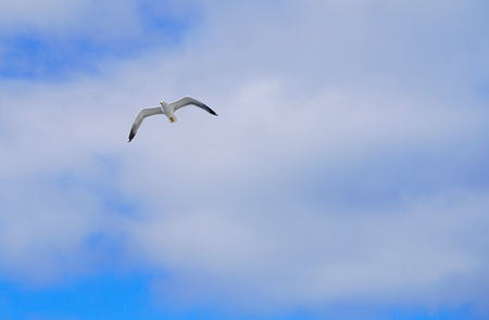 perfect seagull flying up into the sky