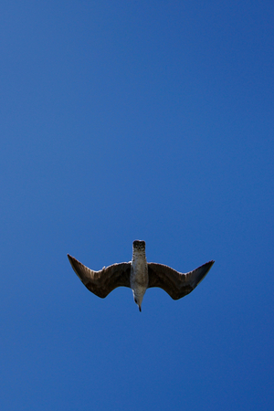 under a in the blue sky flying seagull