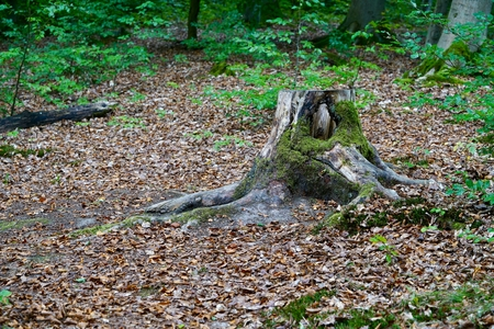 stump with moss in the forest