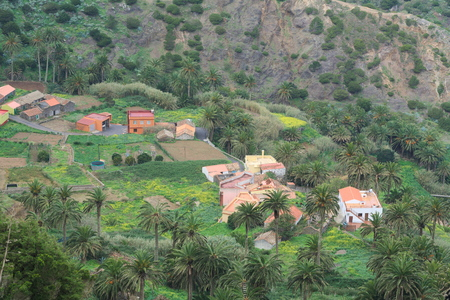 houses beween fields and palms in a valley of La Gomera