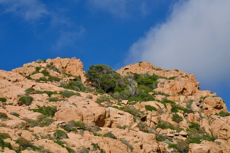 background of a red rock with trees under the blue sky with some clouds