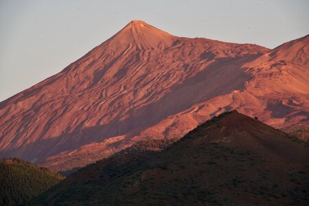 Red colored Tejde of Teneriffe
