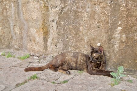 brown cat and white slug in an old town