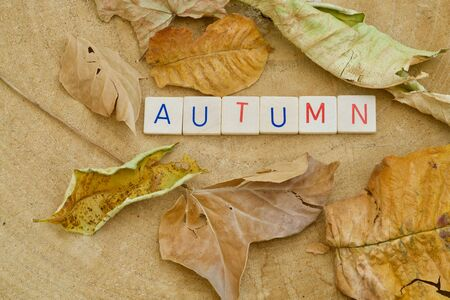 The word AUTUMN in letters, leaves around on a wooden background Reklamní fotografie