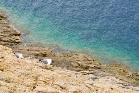 Two seagulls on a cliff, the turquoise sea behind Reklamní fotografie