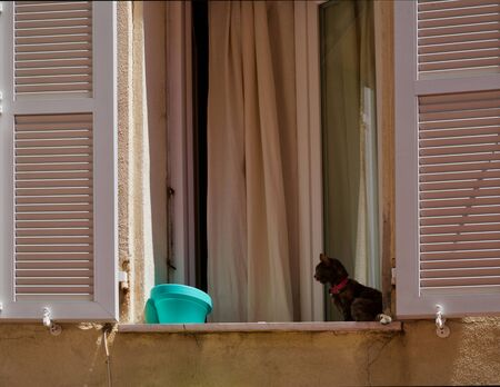 Brown cat sitting on a window sill