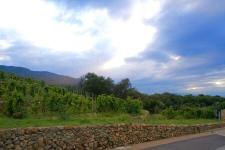 Vineyards of Arglès sur Mer under an evening sky Stok Fotoğraf
