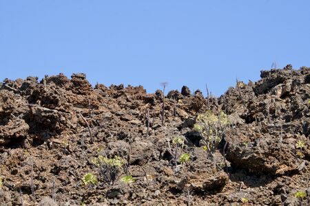 New plants on a volcanic rock under a blue sky