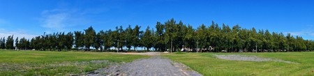 clearly: Panorama of Pine Tree and Clear ly blue sky Stock Photo