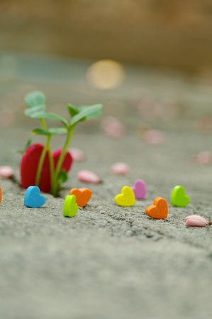 unity small flower: I Many people will get the love in their a little heart