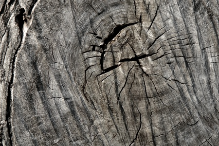 dispirited: A cracked  Surface of log are depress feel
