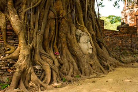 The Head of sandstone Buddha in tree roots at Wat Mahathat, Ayutthaya, Thailand photo