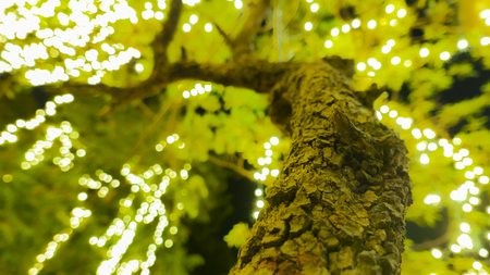 Bokeh image style of  night  lighting on the tree of Royal Grand Palace ,Bangkok,Thailand. Stock Photo