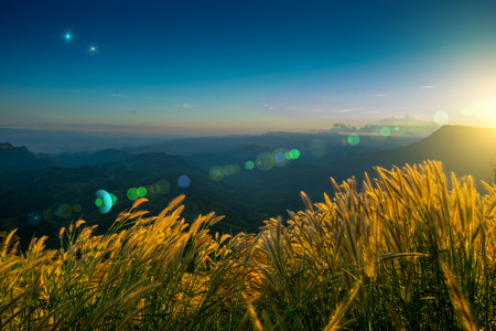lighting flare effect on Grass flower terraces on highlands with sunset at Phetchabun District, Thailand. Photo taken on: 28 November , 2016