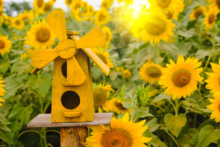 Selective and Soft focus. Bird Houses on Sunflowers field background with lighting flare effect.