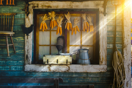 Corn cobs hanging to dry with background of the old Window. Vintage style and lighting effect. Stock Photo