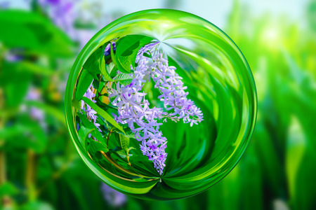 petrea: Violet flower of Petrea Flowers  in glass ball effect  with blurred green background.