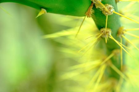 Cactus. Cactus thorns. Macro cactus thorns. Close up thorns of cactus. Cactus Background. Stock fotó
