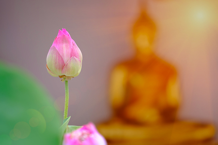 Selective focus point on Pink lotus with blurred buddha gold backgroud in Wat Pho, Bangkok, Thailand.